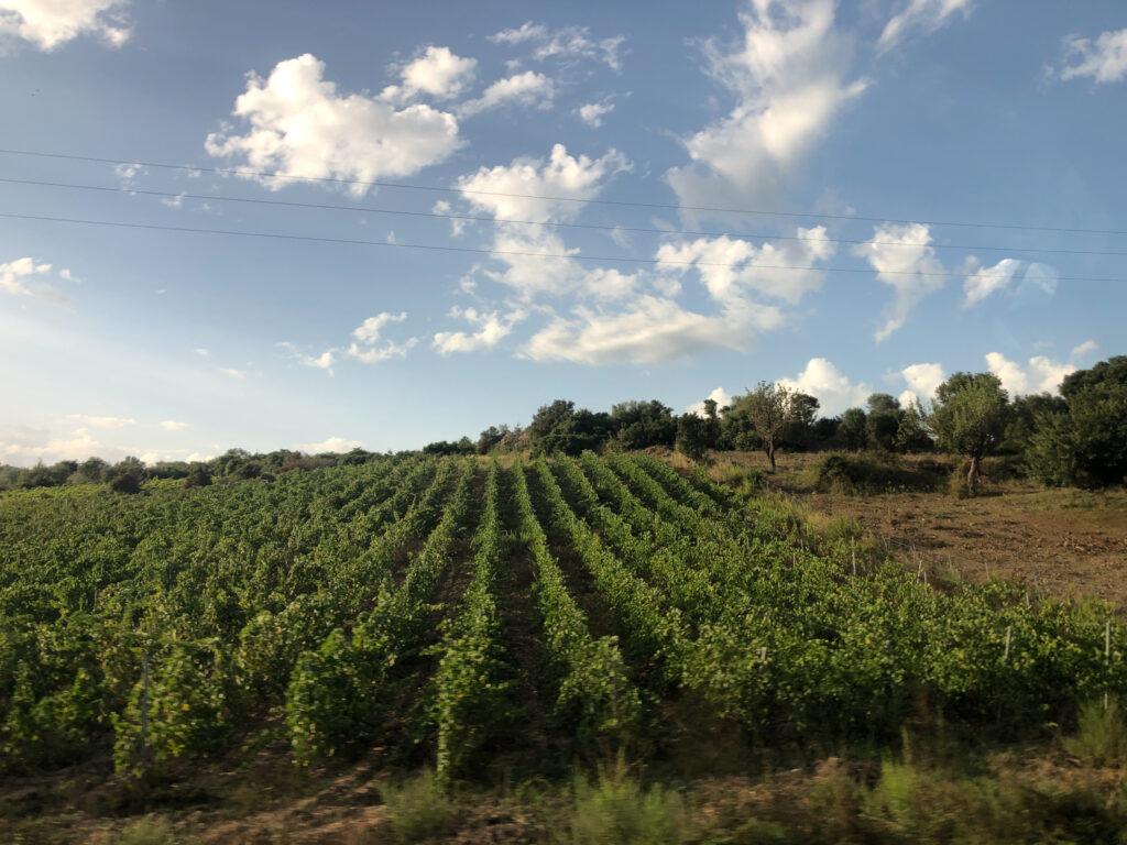 Olienas Weinhänge im Oktober - der eher ein Spätsommer ist