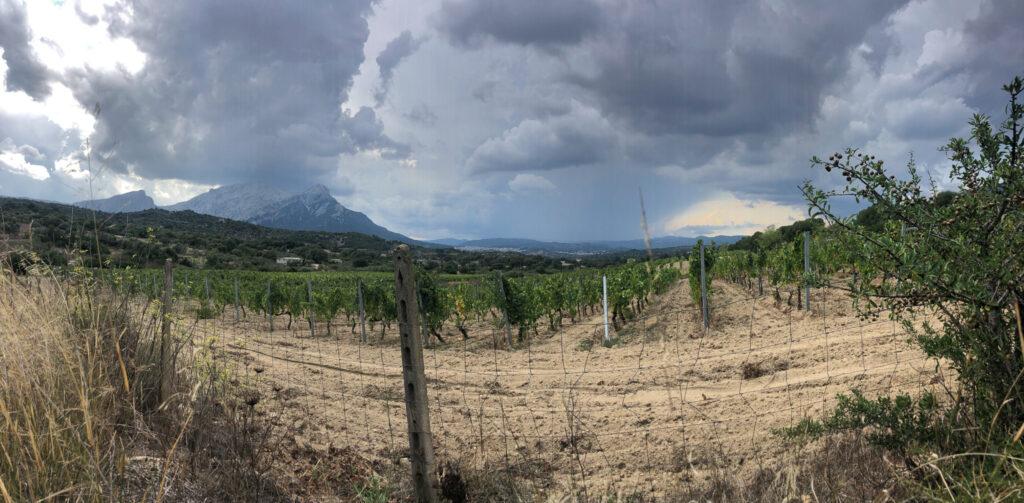 Panoramablick über die Weinhänge zum Corrasi