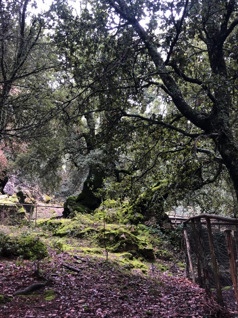 Tolle Bäume gibt es im Foresta di Montes