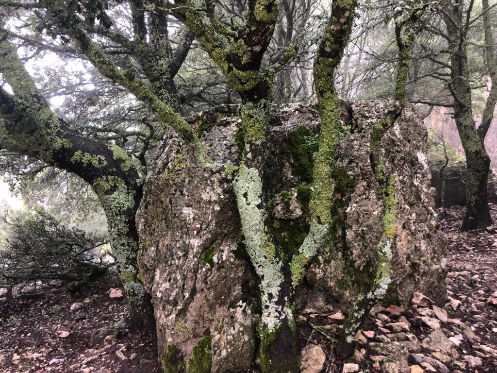 Baum und Stein in friedlicher Koexistenz