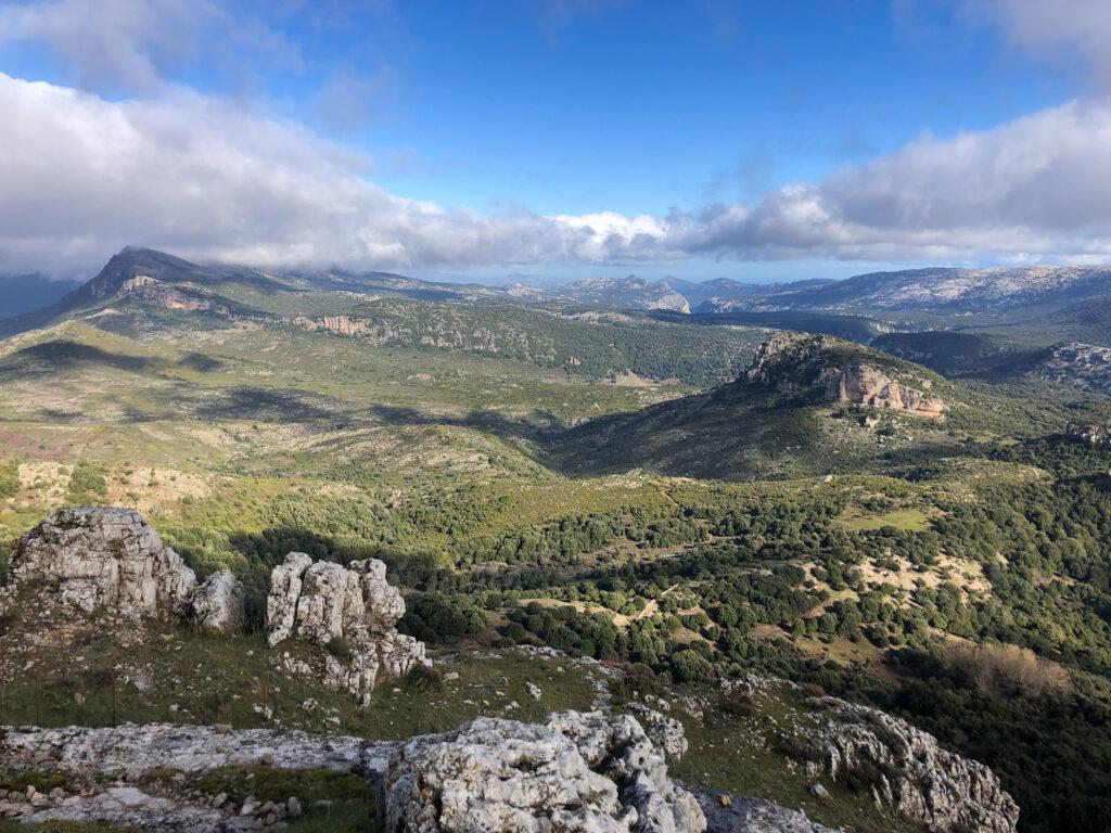 Endlich freigegeben: der Blick auf einen Teil des weiten Steineichenwaldes Foresta di Montes