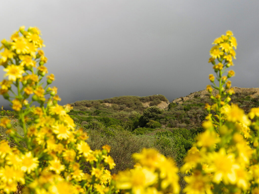 Da war's schön gelb. Welche Farbe hat Sardinien heute?