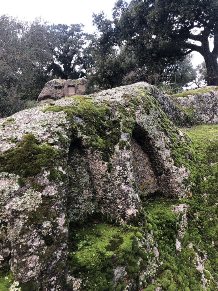 "Moosbewachsene Felsen ""beseelen"" die Landschaft, fast wie Kunstwerke"