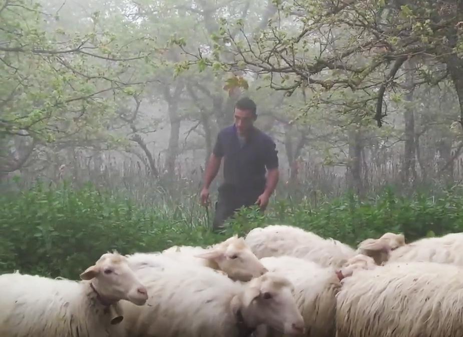 Ein Leben mit Schafen: Hirte und Käser Mattia Moro aus Mamoiada