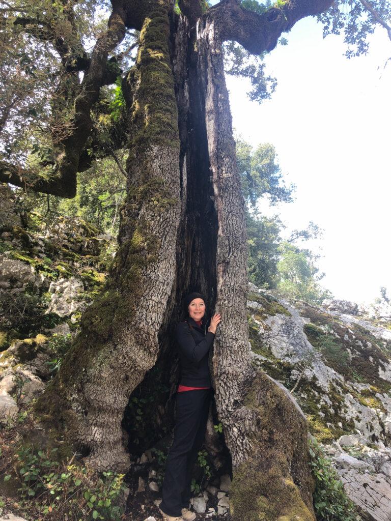 Ein schwarzes Schaf im Baum
