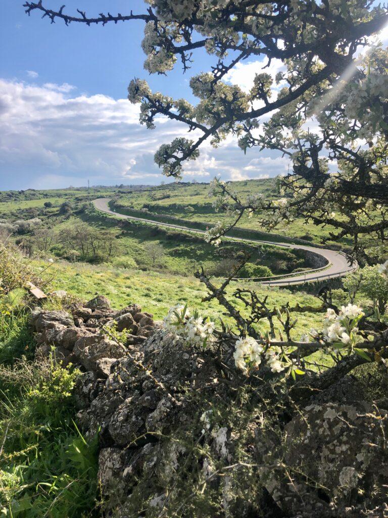 """Der Weg zum """"neuen Sardinien-Urlaub"""" führt durchs Hinterland, wie hier bei Santu Lussurgiu"""